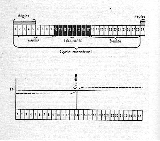 prise de température Période de fécondité 001